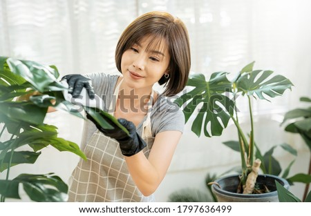 Portrait of beauty asian woman cleaning leaf in her living room. Young asia girl taking care of plants at her home. Hobby and leisure time, stay home quarantine. Green environment, earthday concept Royalty-Free Stock Photo #1797636499