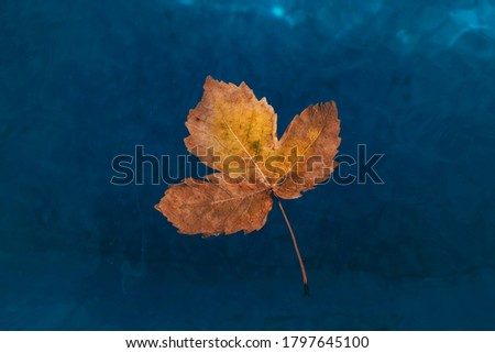 orange leave fallen in water in autumn