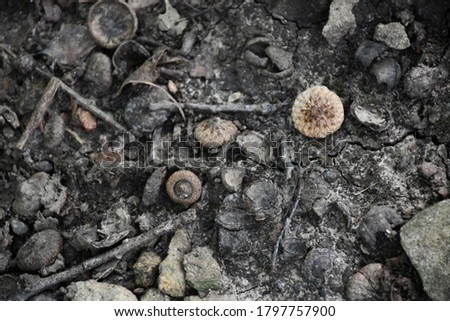 Acorns, sticks, and rocks all mixed together on the ground. Picture taken in Gladstone, Missouri.
