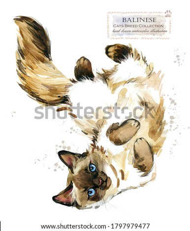 Balinese cat. home pet. breed of Cats series. cute kitten. watercolor domestic animal illustration. pedigreed cats