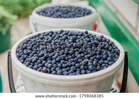 Fresh Blueberry Background. Texture blueberry berries close up. Sprinkle blueberries. Ripe blueberries with copy space for text. Fresh blueberries scattered. Bunch of blueberries. #1798068385