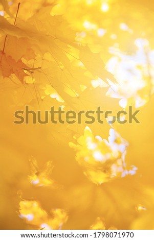 Abstract autumn background, tree branch in autumnal forest, bright warm sun light, golden autumn #1798071970