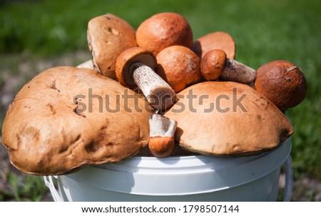 Mushroom season. Mushroom design. Boletus and porcini mushroom in a container in bulk, close-up. #1798507144