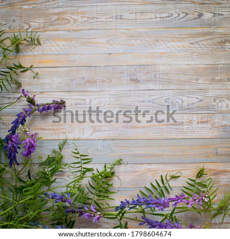 Wild blue flowers on an old gray wooden background. Selective focus. Place for text. Flat still life.