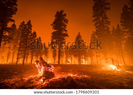 Wildfire burns downed tree in forest Royalty-Free Stock Photo #1798609201