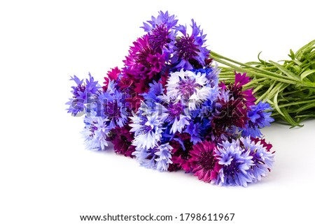 blue and violet cornflowers bouquet, summer flowers on white background, floral background, beautiful small cornflowers close up #1798611967