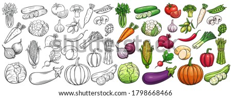 Vegetables drawn vector icons set. Illustration of colored and monochrome vegetables for design farm product, market label vegetarian shop. Royalty-Free Stock Photo #1798668466