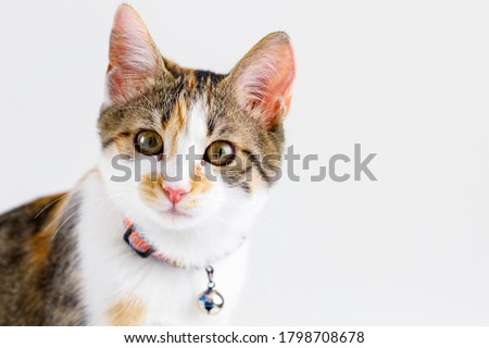 Ginger orange cat have collar and bell portrait studio on white background. Royalty-Free Stock Photo #1798708678