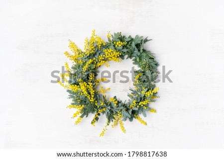 Beautiful Australian native yellow wattle/acacia flower wreath, photographed from above, on a white rustic background. Know as Acacia baileyana or Cootamundra wattle. #1798817638