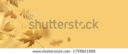Golden flying autumn leaves of different shapes on beige yellow background. Autumn concept, fall background. Minimal floral design, autumn leaf frame. Golden twig. Autumn creative composition. Banner #1798861888