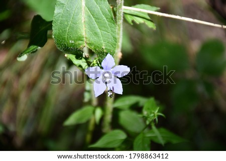 A closeup of purple flowers in the woods. A small bug is on it. Picture taken in Gladstone, Missouri.