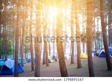 Camping and tent under the pine forest in sunset at north of Thailand.Blured image of camping and tent with high iso grained picture under the pine forest.