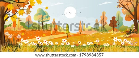 Autumn landscape wonderland forest with grass land, Mid autumn natural in orange foliage, Fall season with beautiful panoramic view with sun, clouds, mountain and maples leaves falling from trees Royalty-Free Stock Photo #1798984357