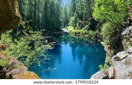 Tamolitch falls aka blue pool in Oregon crystal clear cerulean blue ice cold water  #1799018224