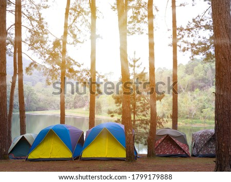 Tourists camped in the woods on the shore of the lake on the hillside.Blured image of camping and tent with high iso grained picture under the pine forest.
