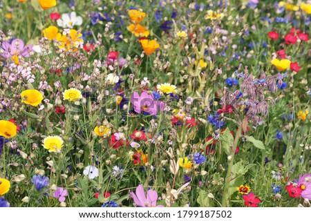 beautiful colorful meadow of wild flowers Royalty-Free Stock Photo #1799187502