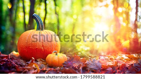 Pumpkins On Red Leaves In Autumn Forest With Defocused Sunset Background Royalty-Free Stock Photo #1799588821