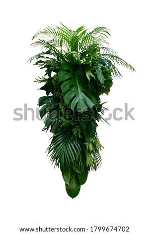 Tropical leaves foliage plants bush (Monstera, palm, rubber plant, pine, fern and philodendron leaves) floral arrangement indoors vertical garden nature backdrop isolated on white with clipping path. #1799674702