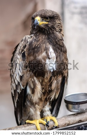 Beautiful picture of an eagle