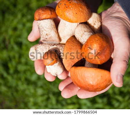 Active rest of the mushroom picker. Close-up of a hand and mushrooms in the process. #1799866504