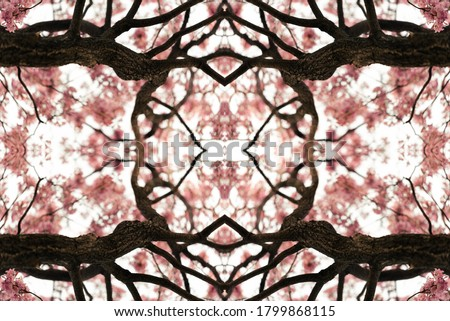 Kaleidoscope effect of a Tabebuia tree in bloom, full of pink flowers and symmetric branches forming a perfect geometric shape. Selective focus on the cortex. Nature and fractal concept.
