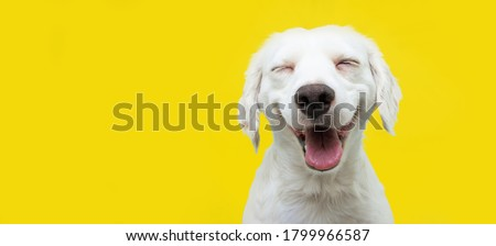 Happy puppy dog smiling on isolated yellow background. Royalty-Free Stock Photo #1799966587