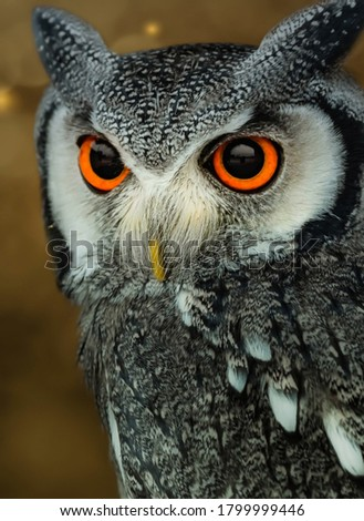 Picture Of An Owl Having Beautiful Orange and Black Eyes