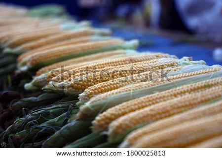 Macro Photo food vegetable sweet raw ear corn. Texture background of fresh yellow corns. Image vegetable product big sweet maize