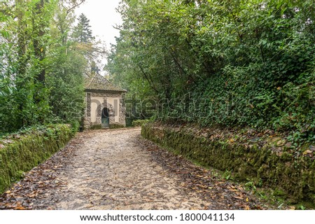 Amazing, old park in Serra de Bussaco, Mealhada, Portugal #1800041134