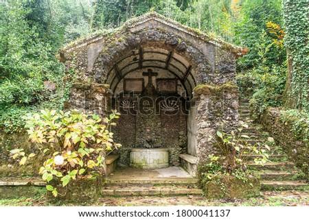 Amazing, old park in Serra de Bussaco, Mealhada, Portugal #1800041137