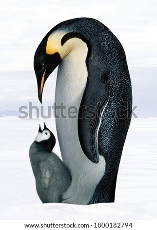 penguin with a baby penguin