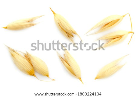 Oat seeds are isolated on white with a shadow. Oat seeds isolated on a white background. Set of oat grains isolated on white background. Top view of oat grains. #1800224104