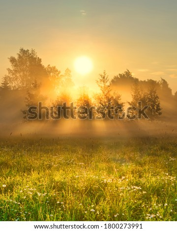 Early morning scenery in field. Sun casting beautiful rays of light through the mist and trees. Vibrant rays of sunlight in hazy meadow. Chamomile field in sunshine. Yellow sunrise with fog in summer. Royalty-Free Stock Photo #1800273991