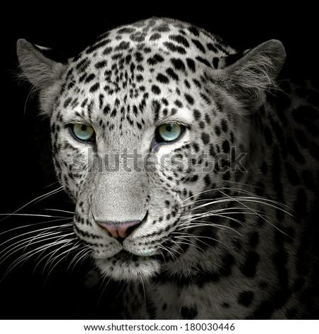 Headshot of jaguar portrait. #180030446