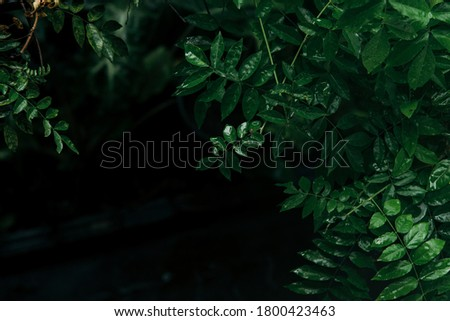 Lush green leaves with dark tone background  Royalty-Free Stock Photo #1800423463