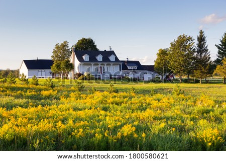 Pretty ancestral neoclassical patrimonial country house surrounded by barns seen across a field of Canadian Goldenrod in St-Augustin-de-Desmaures, Quebec, Canada Royalty-Free Stock Photo #1800580621