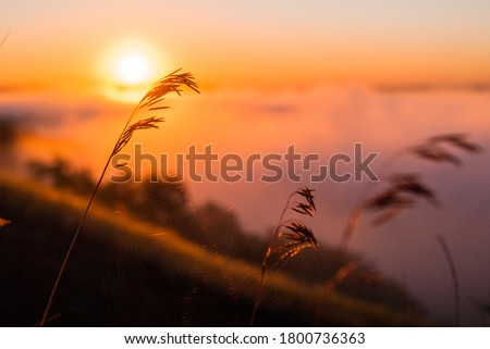 Sunrise over the cliff. morning haze at dawn on a cliff in summer. Freshness.  Royalty-Free Stock Photo #1800736363