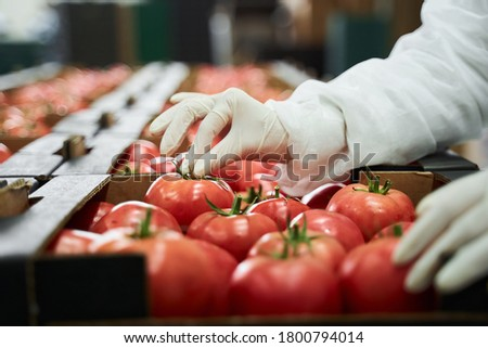 Cropped photo of a qualified worker in latex gloves packing ripe tomatoes at the production site