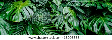 Tropical jungle green leaves background, fern, palm and Monstera Deliciosa leaf on wall with dark green, nature floral forest plant pattern concept background, horizontal
