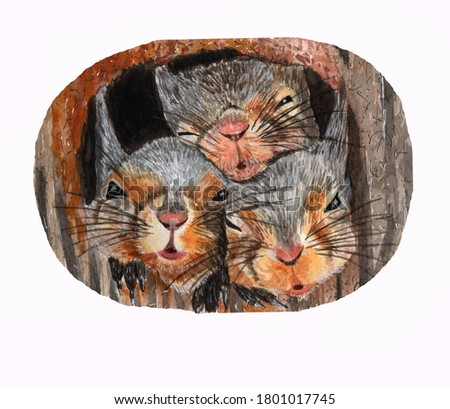 Three squirrels, cute curious faces of wild animals. Watercolor illustration