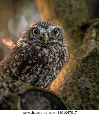 Picture of a cute owl