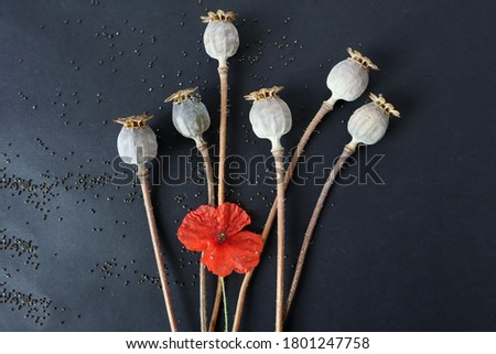 Poppy boxes with seeds and a red poppy flower on a black background, top view