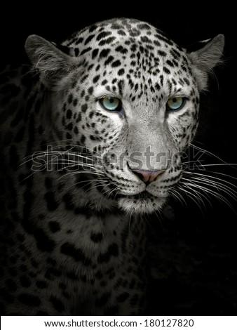 Headshot of jaguar portrait. #180127820