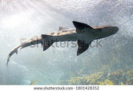 A beautiful picture near a predatory shark
