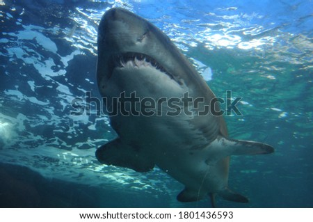A beautiful picture near a predatory shark,