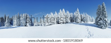A panoramic view of the covered with frost trees in the snowdrifts. Magical winter forest. Natural landscape with beautiful sky. The revival of the planet. #1801918069