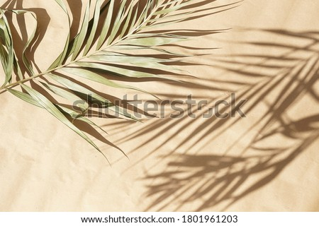 blured natural palm leaves shadow background on beige paper texture .Tropics minimalist abstract backdrop. poster Royalty-Free Stock Photo #1801961203