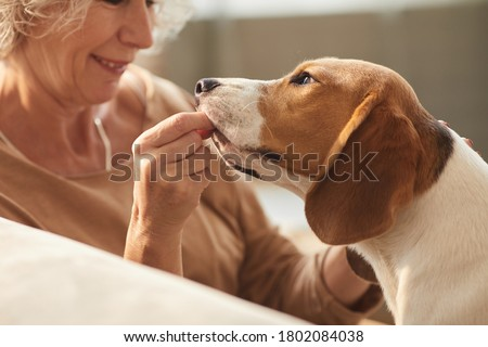 Close up of smiling senior woman playing with dog and giving him treats while sitting on couch in cozy home interior, copy space Royalty-Free Stock Photo #1802084038