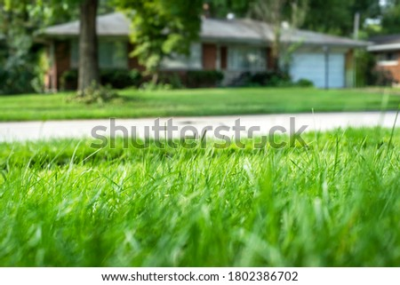 Closeup shallow focus green grass lawn in sunshine, healthy lawn, suburban ranch house in background, tall fescue, thick, low angle, residential neighborhood, suburbs, close neighbors, privacy Royalty-Free Stock Photo #1802386702