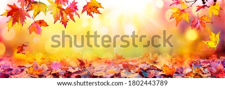Autumn Abstract - Colorful Leaves With Defocused Park In Background At Sunset